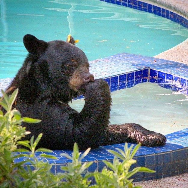 This bear thinking about all the fun he's gonna have this summer: