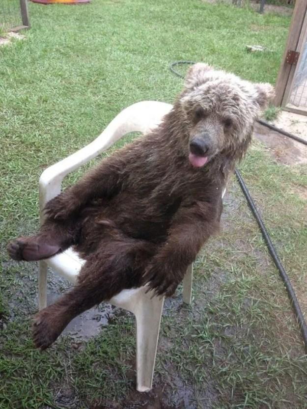This bear enjoying the weekend: