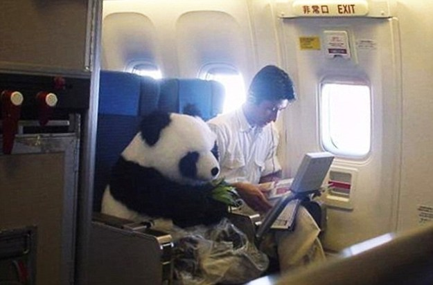 This panda bear on his way to meet his boys for MDW:
