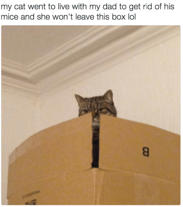 They'd rather stay in a box than do all of our dirty work.