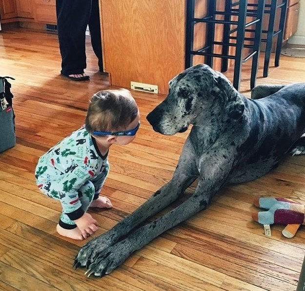 This pupper, who just made a curious new best friend.