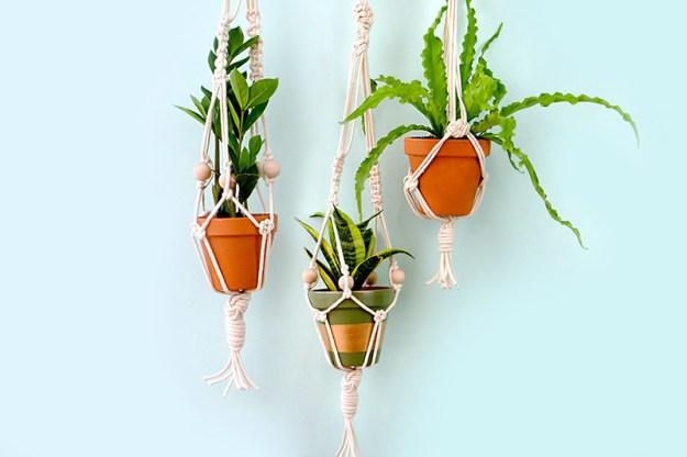 Dale a las plantas de tu hogar un nuevo y divertido hogar.