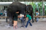 Mosha, an elephant who lost her leg when she was just 7 months old in a land mine blast at the Myanmar-Thailand border, now uses a prosthetic leg to walk around.