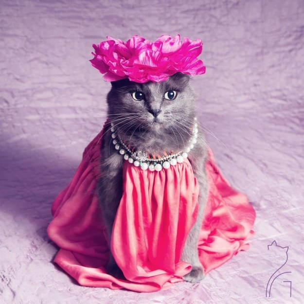 "Meet Pitzush, or the ""Puss in Glam"" on Instagram:"