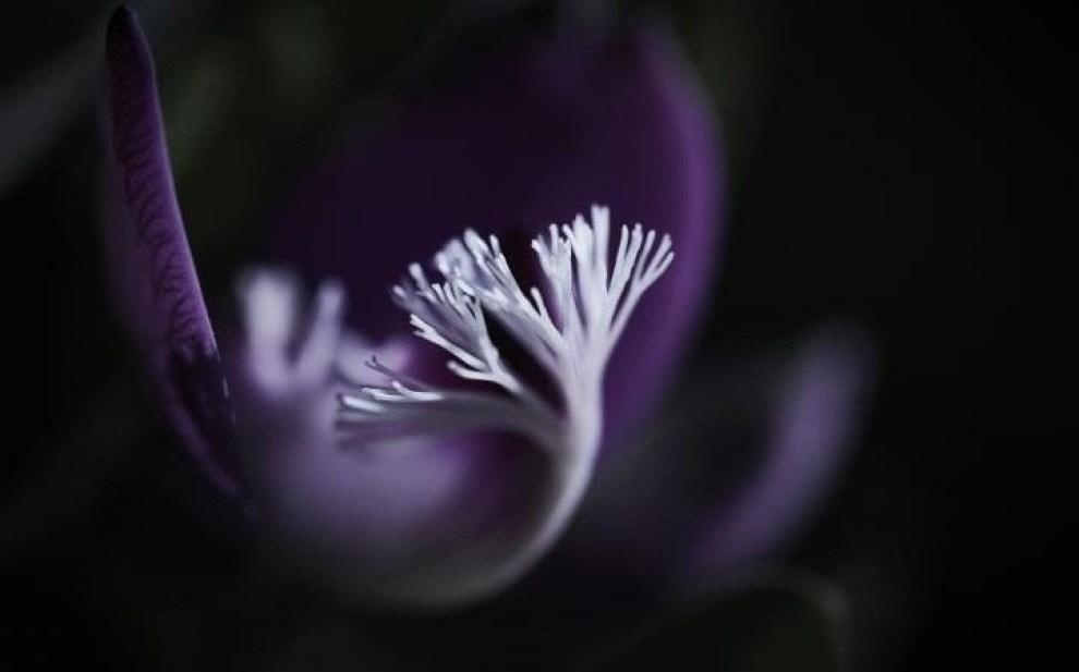 """International Garden Photographer of the Year Macro Art Winners"" —The Telegraph"