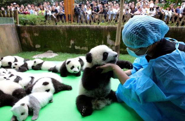 Keine Pandas sind beim Entstehen dieser Inhalte zu Schaden gekommen.