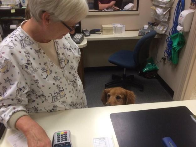 Esta otra perrita que está mirando muy atentamente el calendario como haciendo que le interesa, pero piensa decir que tiene mucho lío el día que tengan libre.