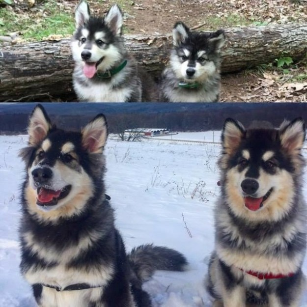 This crew who somehow managed to get fluffier over the years.