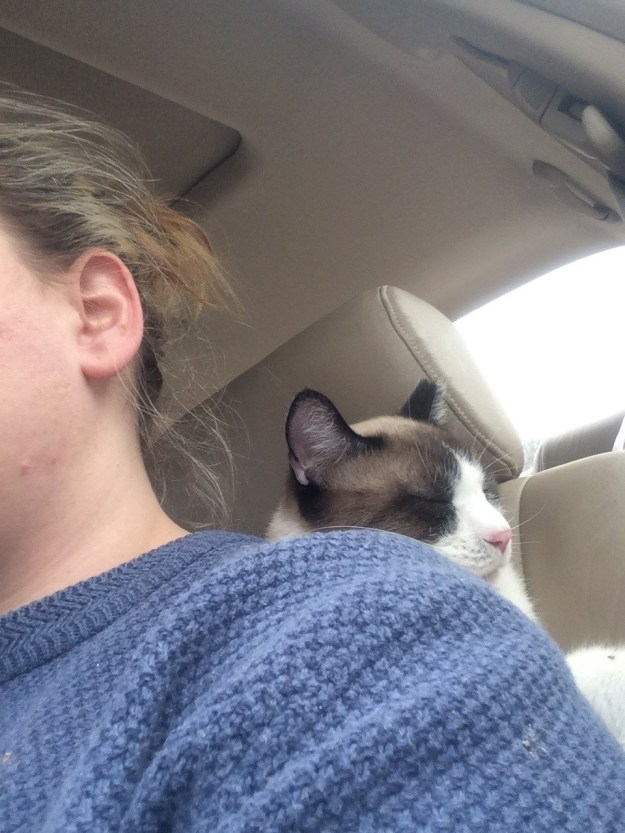 """This car-riding cat who's like, """"It's safest if I sleep between your back and the car seat, trust me."""""""