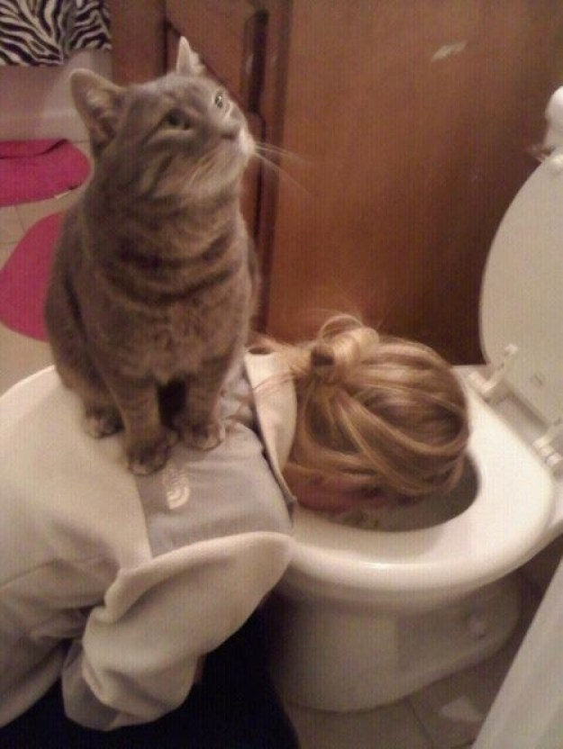 """This BFF cat who's like, """"OMG, I'm SUCH a good friend."""""""