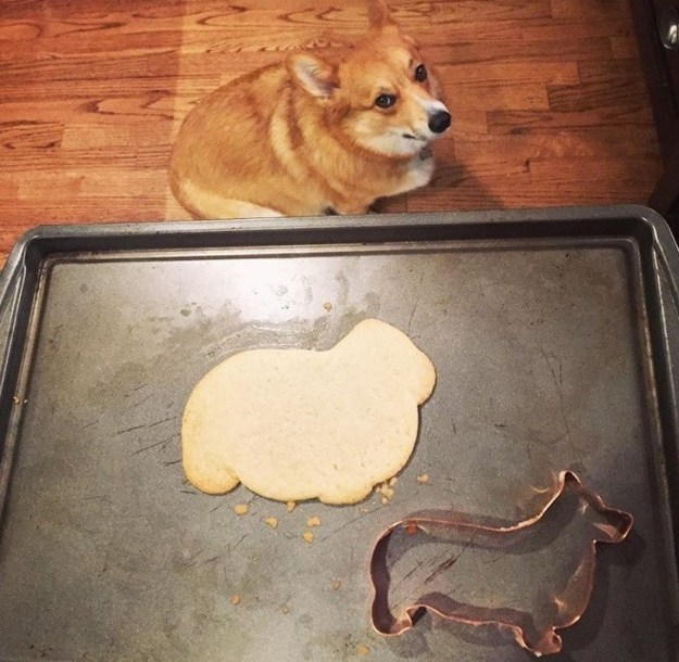 And this misshapen dog cookie (with added real-life dog to see just how badly the baker messed up).