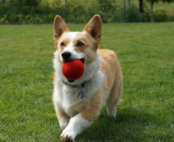 Image result for dog playing with balls