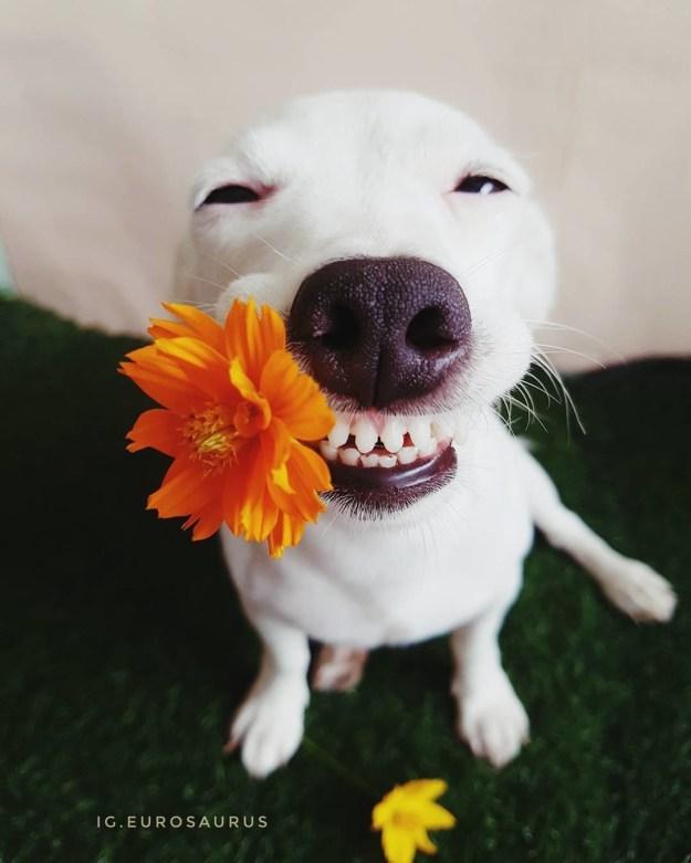たぶん、世界で一番笑顔にさせてくれる犬。