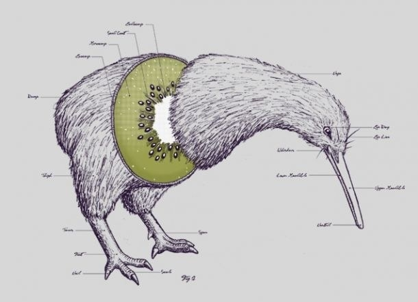 As their name suggests, kiwi birds look like walking kiwi fruits!