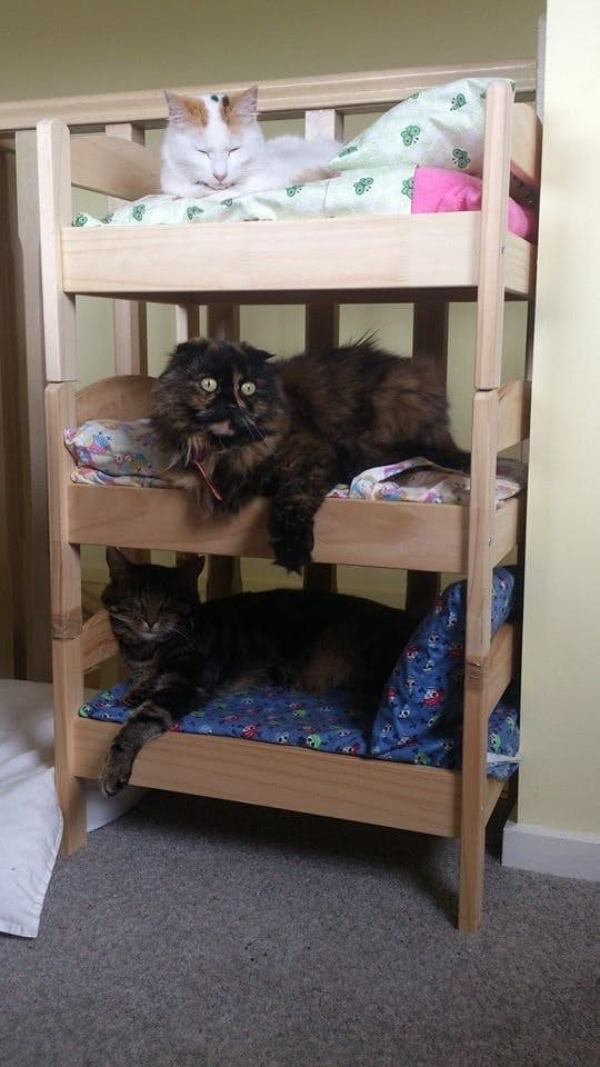 This bunk bed for your kittens.