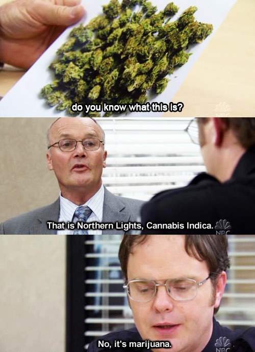 When Dwight pulled in Creed to grill him on some drugs: