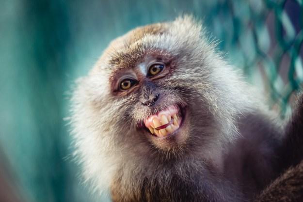 Monkeys sometimes floss.