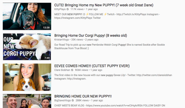 Your YouTube homepage is all funny dog video compilations...