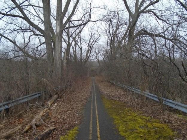 This abandoned road is being taken back by nature: