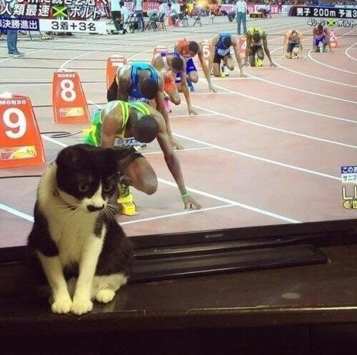 This cat is you when someone recommends exercise: