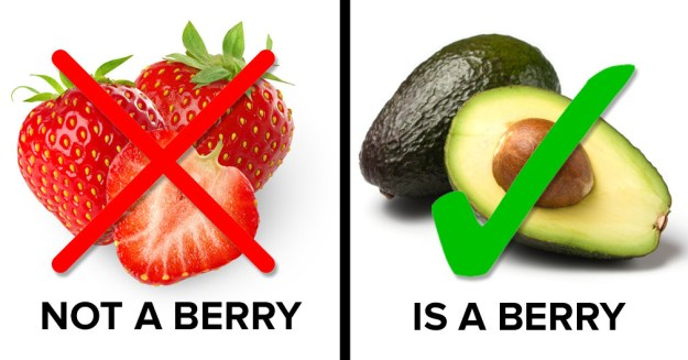 Strawberries aren't berries, but avocados are.