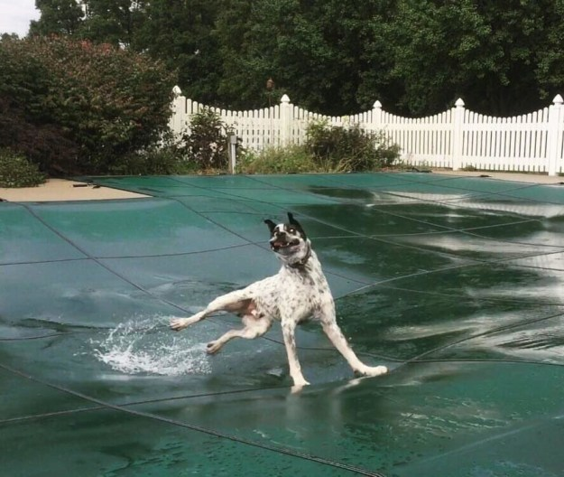 Also, this poor dog...and that pool cover: