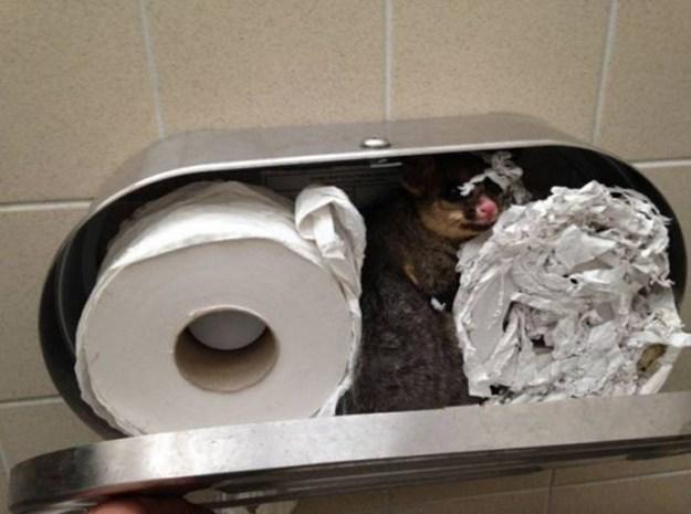 This toilet paper dispenser that's housing a hidden guest.