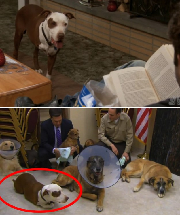 Champion from Parks and Rec makes an appearance in an episode of The Office.