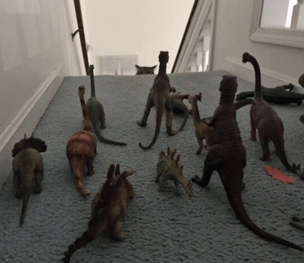 This owner who had to take drastic measures so that their cat wouldn't venture upstairs: