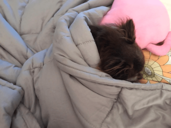 """""""My. Weighted. Blanket. Y'all, I have never slept so soundly in my life. I fall asleep quickly and more impressively, I stay asleep all night!!""""—erp2712Amazon reviewers say it helps with their insomnia, anxiety, and just general sleep quality — and it works for both kids and adults (and some dogs, aww). Make sure to choose the weight and size most appropriate for the person who'll be using it the most; look for one that's about 10% of the user's bodyweight (but skip it if you're a snorer or have sleep apnea). Get it on Amazon for $59.80-$101.80, depending on the size and weight you need."""