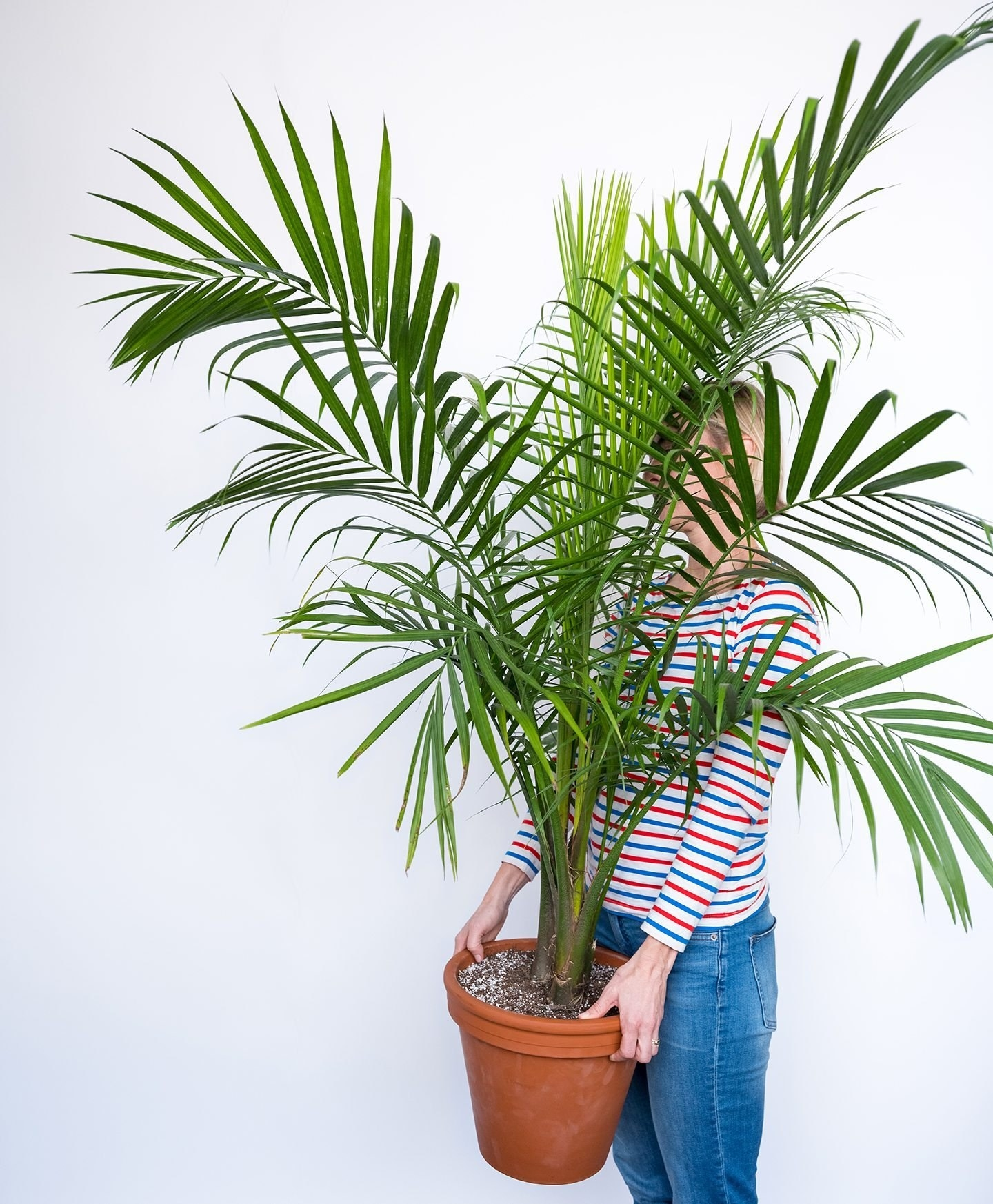 18 Of The Best Places To Buy Houseplants Online