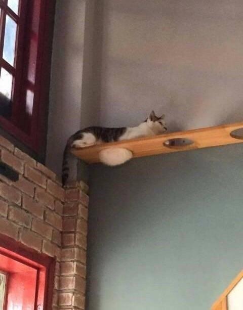 gatos en estanteria