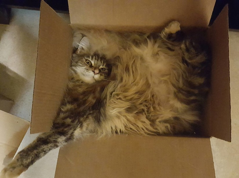 gato con pereza
