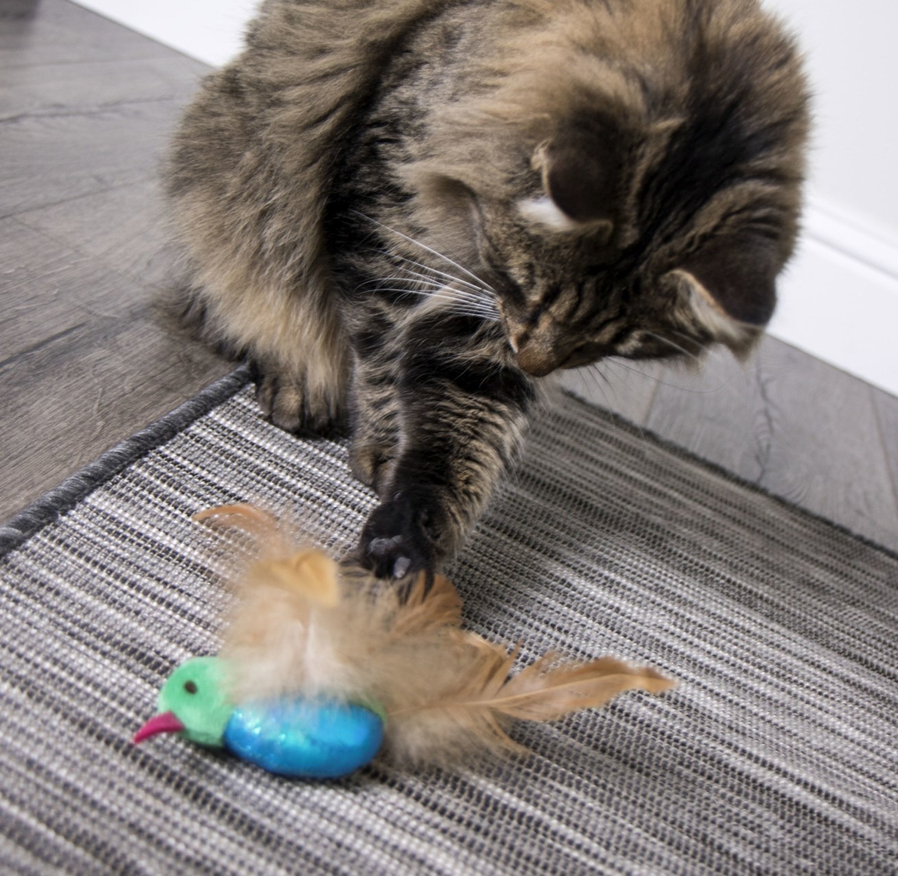 """Promising review: """"My cat doesn't like toys with feathers. However this little singing hummingbird is a totally different story. She is 16 years old and loves it. It's always carried to her bed for nap time. It's a winner for her."""" —MeowMeowsMommyPrice: .99"""