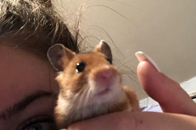 Hamster Water Bottle Rave Meme Hamster Vs Water Bottle Hamster