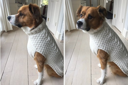 Chris Evans Dressed His Dog In His Cable Knit Sweater From ...