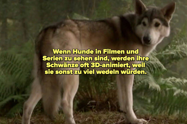 Fototapete Tapete Poster 225396fw Lustige Tier Selfies Hunde Tiere