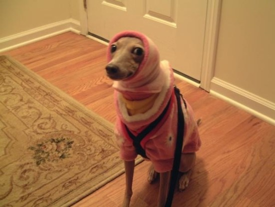 Awkward bundled up dog