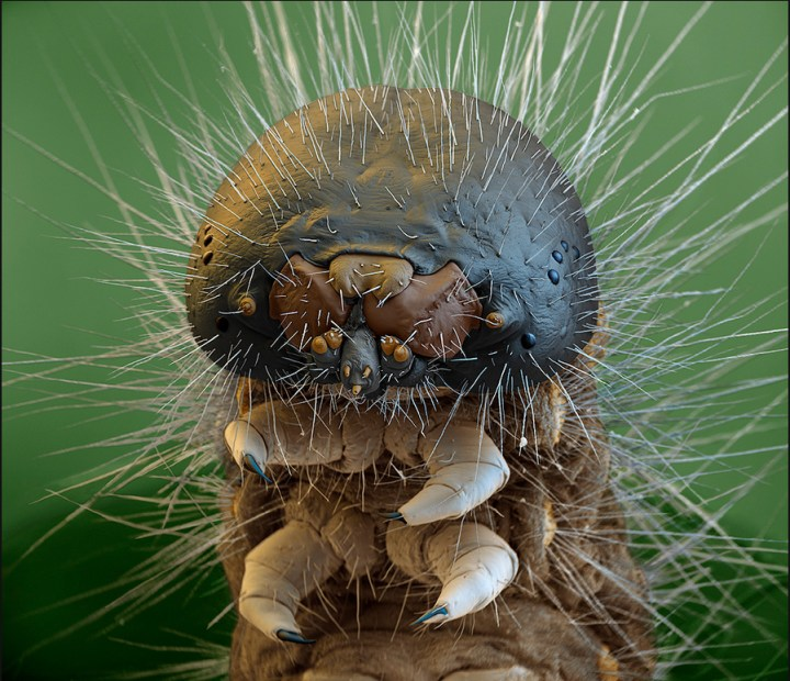 Caterpillar, again:
