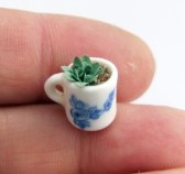 Tiny Succulent in a Mug