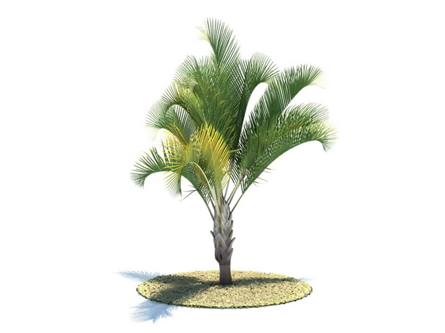 Dypsis Decaryi Tree 3d Model 3dsMax Files Free Download Modeling 8584 On CadNav