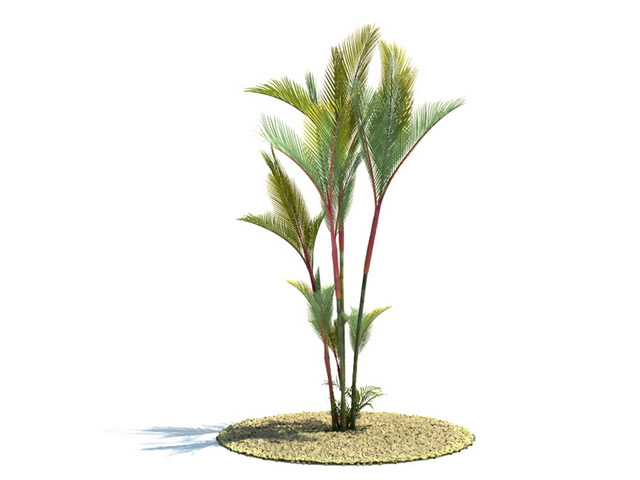 Cyrtostachys Renda Tree 3d Model 3dsMax Files Free Download Modeling 8610 On CadNav