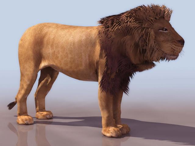 Male Lion 3d Model 3D Studio Files Free Download