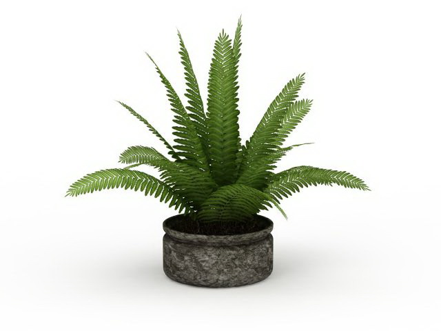 Fern Plant Pot 3d Model 3ds Max Files Free Download Modeling 29723 On CadNav