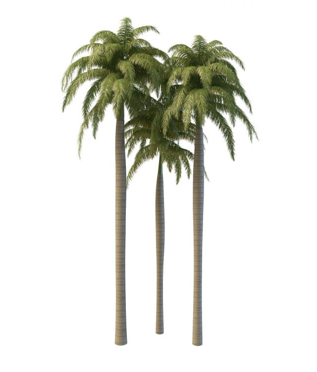 Beautiful Royal Palm Trees 3d Model 3ds Max Files Free