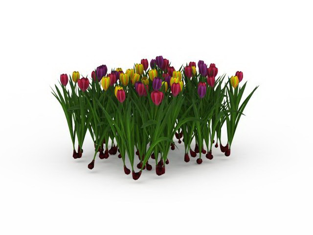 Tulip Plant With Flower 3d Model 3ds Max Files Free