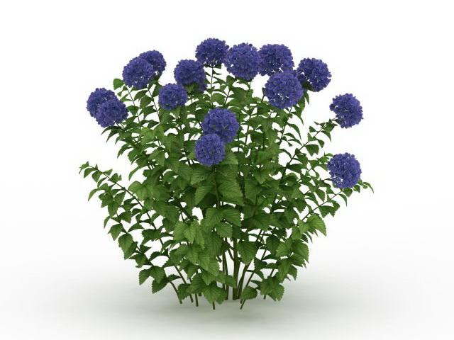 Blue Hydrangea Plant 3d Model 3ds Max Files Free Download