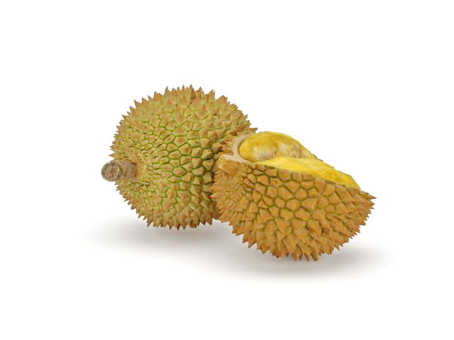 Durian Fruit And Open Durian 3d Model 3ds Max Files Free Download Modeling 31883 On CadNav