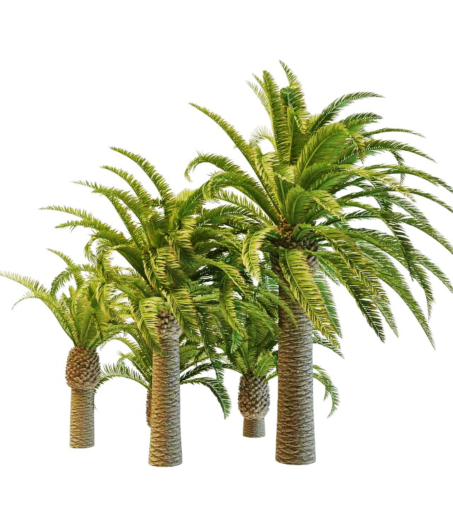 Varieties Of Pineapple Palm Trees 3d Model 3ds Max Files Free Download Modeling 32245 On Cadnav