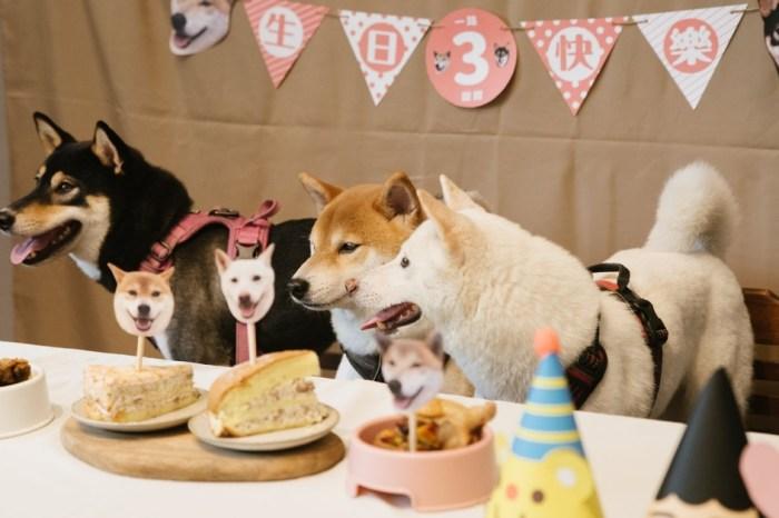 黑吉良食|台中寵物複合式專門店,除了美食還有寵物餐點及寵物慶生服務唷~